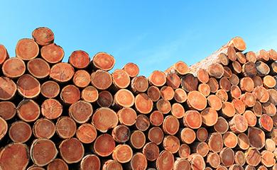 TREE AND ELEPHANT美洲象 遍布全球的原木采购体系,加拿大专业制木公司